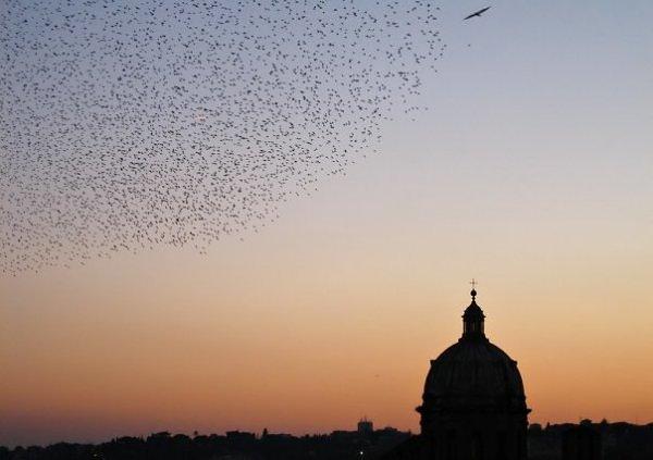 Birds in Rome